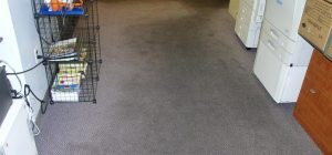 Before ProClean Carpet Cleaning Services